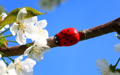 Bugs That Are Good For Your Trees